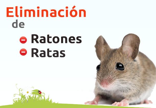 Fumigacion de ratones control de roedores eliminar - Ratones en casa eliminar ...